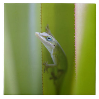 A green anole is an arboreal lizard tile