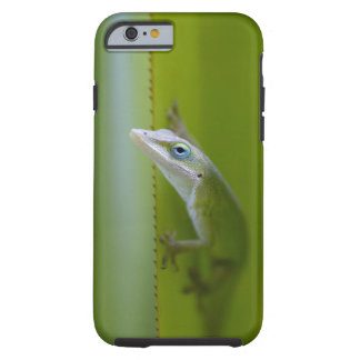 A green anole is an arboreal lizard tough iPhone 6 case