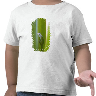 A green anole is an arboreal lizard t shirts
