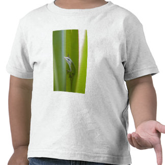 A green anole is an arboreal lizard tee shirts