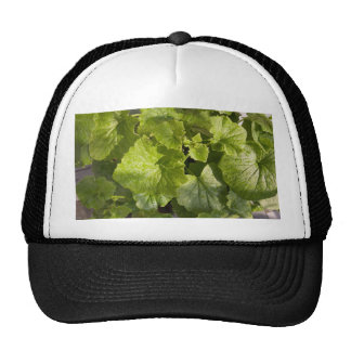 A green leafy vegetable after watering mesh hats