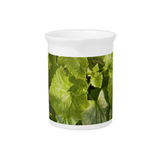 A green leafy vegetable after watering drink pitchers