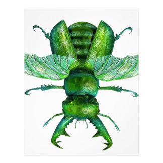A Green Stag Beetle Letterhead