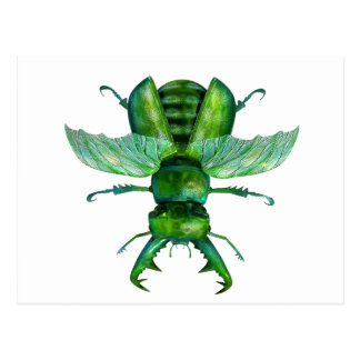 A Green Stag Beetle Postcard