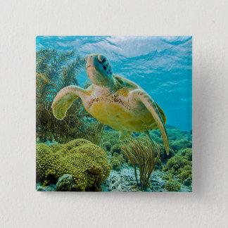 A Green Turtle On The Shallow Reefs Of Bonaire Button