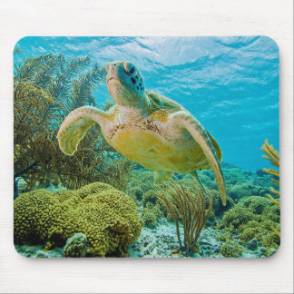 A Green Turtle On The Shallow Reefs Of Bonaire Mouse Pad