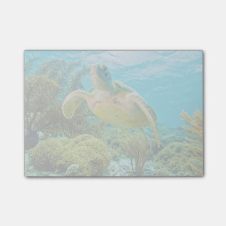 A Green Turtle On The Shallow Reefs Of Bonaire Post-it Notes