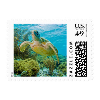 A Green Turtle On The Shallow Reefs Of Bonaire Postage
