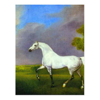 A Grey Horse by George Stubbs Postcard