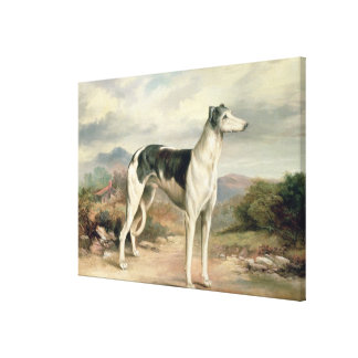 A Greyhound in a hilly landscape Canvas Prints