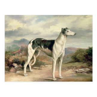 A Greyhound in a hilly landscape Postcard