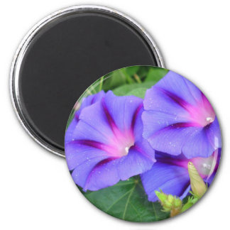 A Group of Beautiful Morning Glories 2 Inch Round Magnet