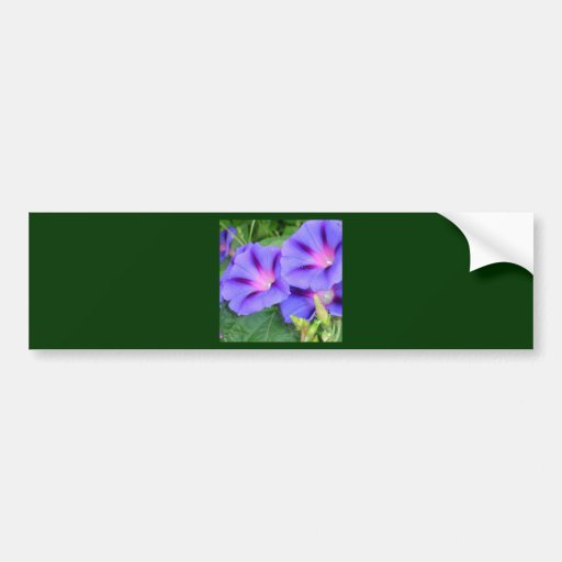 A Group of Beautiful Morning Glories Bumper Stickers