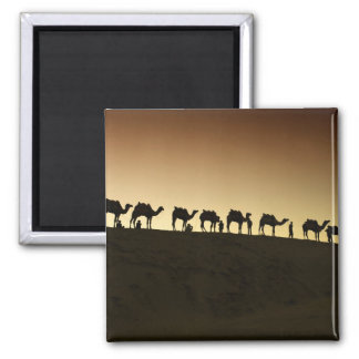 A group of camel herders with their camels at 2 inch square magnet