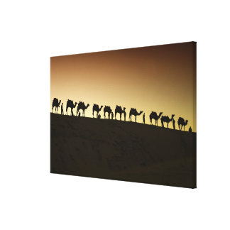 A group of camel herders with their camels at canvas print