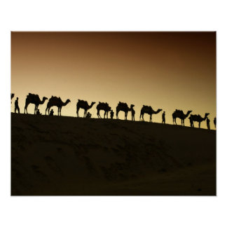 A group of camel herders with their camels at poster