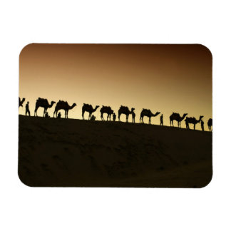 A group of camel herders with their camels at rectangular photo magnet
