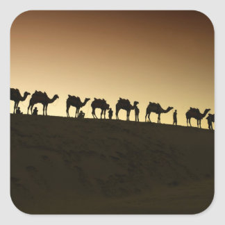 A group of camel herders with their camels at square sticker