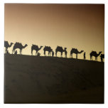 A group of camel herders with their camels at tiles