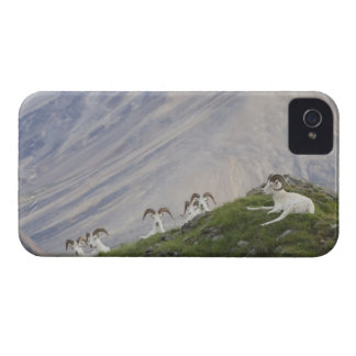 A group of Dall sheep rams rest on Marmot Rock 2 iPhone 4 Cover