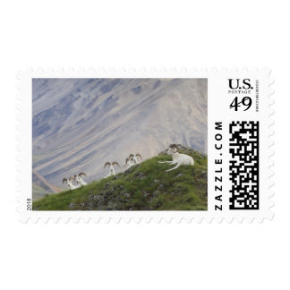 A group of Dall sheep rams rest on Marmot Rock 2 Stamp