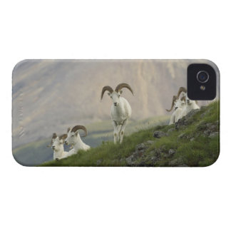 A group of Dall sheep rams rest on Marmot Rock iPhone 4 Case