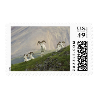 A group of Dall sheep rams rest on Marmot Rock Stamp