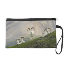 A group of Dall sheep rams rest on Marmot Rock Wristlet Purse