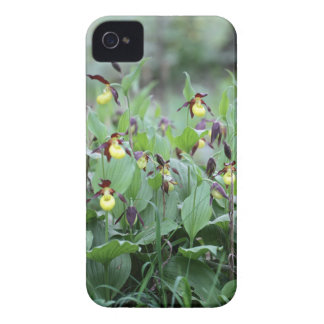 A group of ladys slipper orchids iPhone 4 case