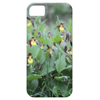A group of ladys slipper orchids iPhone SE/5/5s case