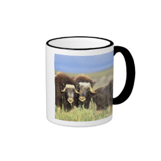 A group of muskoxen browse on willow shrubs on ringer coffee mug