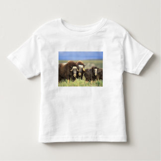 A group of muskoxen browse on willow shrubs on toddler t-shirt