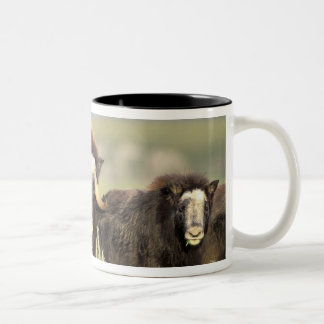 A group of muskoxen browse on willow shrubs on Two-Tone coffee mug