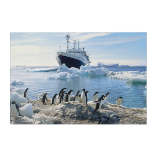 A Group Of Penguins Standing On An Icy Beach Acrylic Wall Art