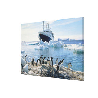 A Group Of Penguins Standing On An Icy Beach Canvas Print