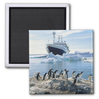 A Group Of Penguins Standing On An Icy Beach Magnet
