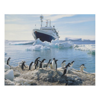 A Group Of Penguins Standing On An Icy Beach Panel Wall Art