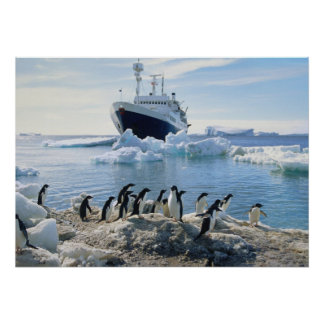 A Group Of Penguins Standing On An Icy Beach Poster