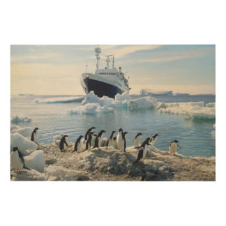 A Group Of Penguins Standing On An Icy Beach Wood Print
