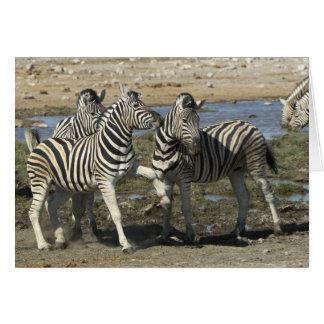 A group of Plains Zebra (Equus qagga) greet each Greeting Card
