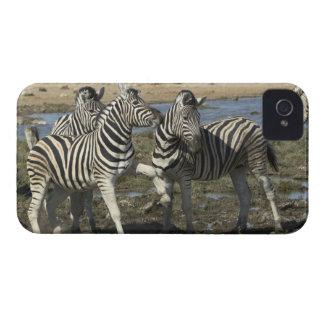 A group of Plains Zebra (Equus qagga) greet each Case-Mate iPhone 4 Case