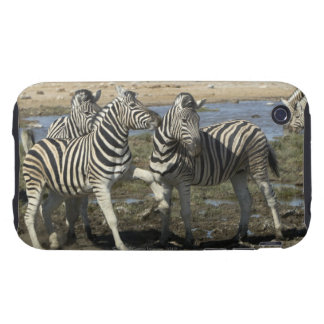 A group of Plains Zebra (Equus qagga) greet each iPhone 3 Tough Cases