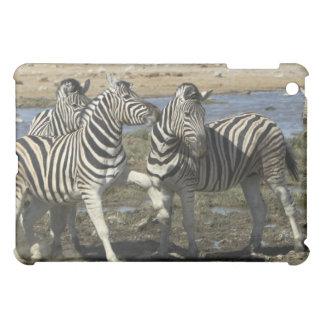 A group of Plains Zebra (Equus qagga) greet each iPad Mini Case