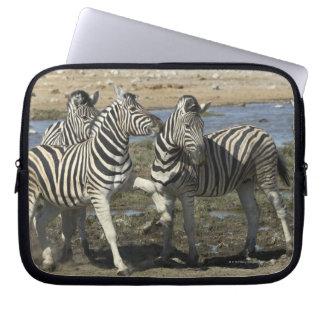A group of Plains Zebra (Equus qagga) greet each Computer Sleeve