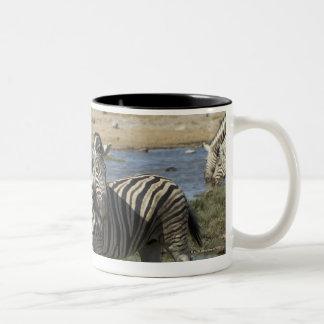 A group of Plains Zebra (Equus qagga) greet each Two-Tone Coffee Mug