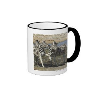 A group of Plains Zebra (Equus qagga) greet each Ringer Coffee Mug