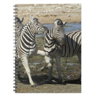 A group of Plains Zebra (Equus qagga) greet each Note Book