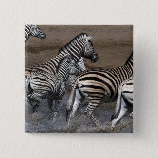 A group of Planes Zebra (Equus quagga) at a Button