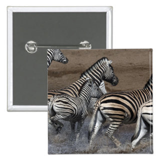A group of Planes Zebra (Equus quagga) at a Button