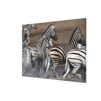 A group of Planes Zebra (Equus quagga) at a Canvas Print